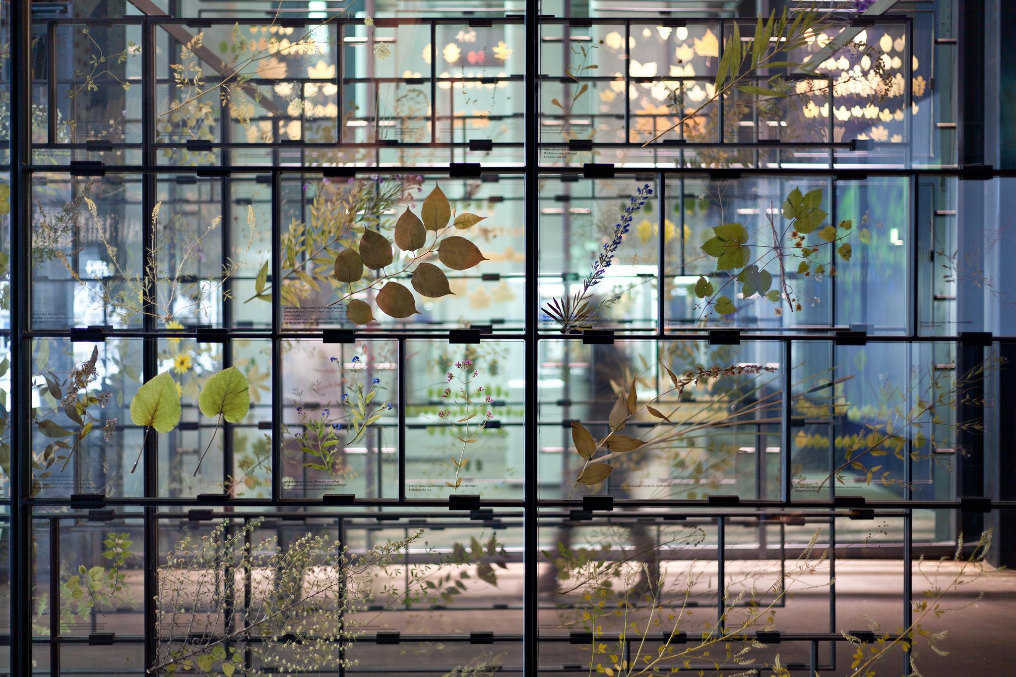 Einblick in eine Ausstellung mit getrockneten Pflanzen