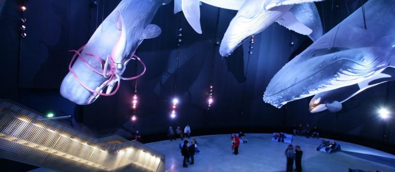 """Blick in einen Ausstellungsraum des Ozeaneums Stralsung mit den """"Riesen der Meere"""" Nach"""